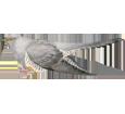 Cuco común  - plumaje 52