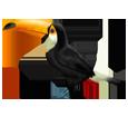Tucán - plumaje 46