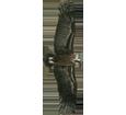 Buitre negro - plumaje 51